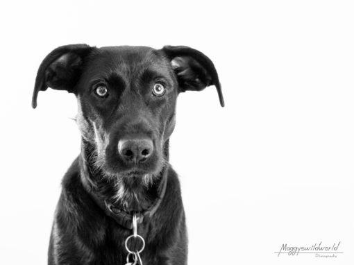 3 Ideen für Aufmerksamkeit bei deinem Hundefotoshooting